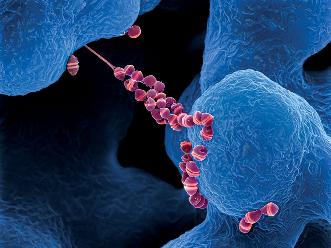 streptococcus-faecalis-v-sperme
