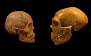 http://www.smithsonianmag.com/ist/?next=/science-nature/science-shows-why-youre-smarter-than-a-neanderthal-1885827/